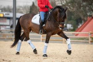 photographe équitation concours dressage cso et spectacle